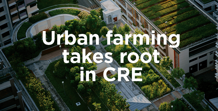 Urban Farming (image)